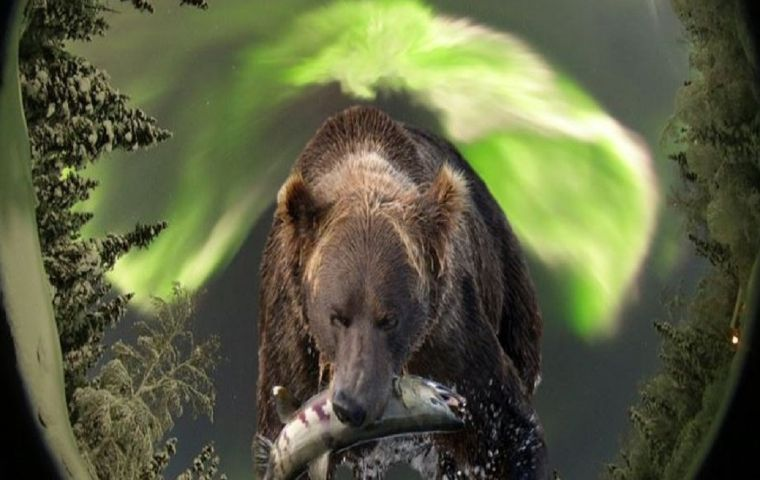 More Info for Bears and Aurora of Alaska